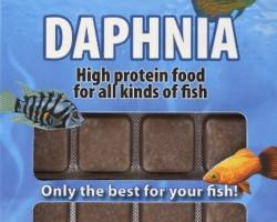 Daphnia 100 Gr Blister - 24 Cube New Line M20
