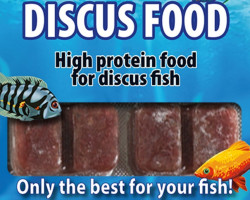 Discusfood 100 Gr Blister - 20 Cube New Line M20