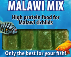 Malawi Mix 100 Gr Blister - 20 Cube New Line M20